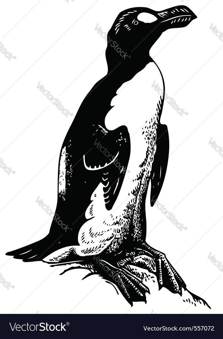 Bird pinguinus impennis vector | Price: 1 Credit (USD $1)