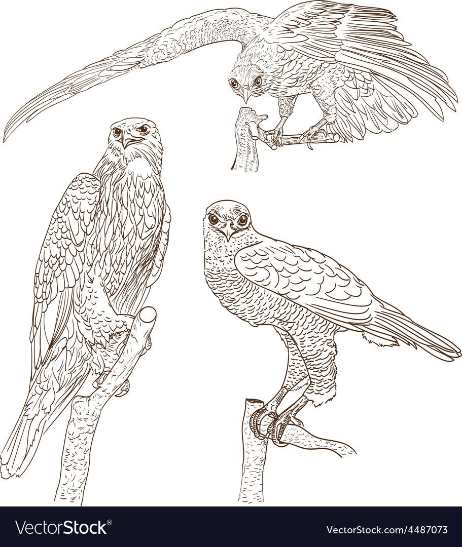 Bird vector | Price: 1 Credit (USD $1)