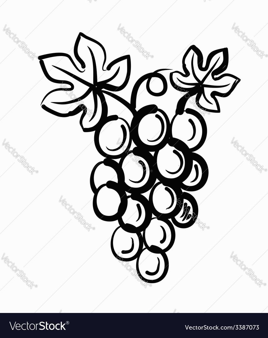 Grapes vector | Price: 1 Credit (USD $1)