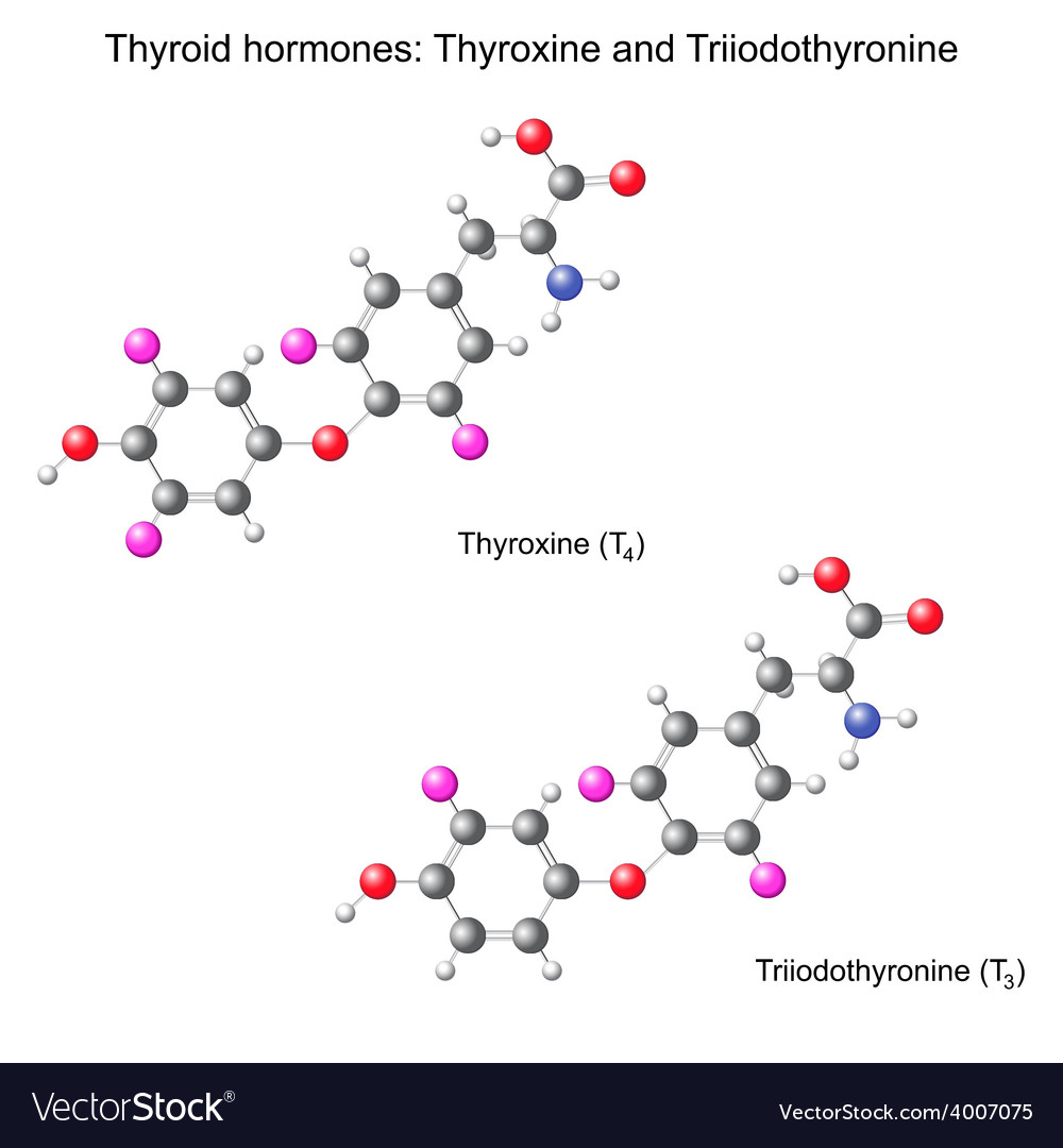 Structural chemical model of thyroid hormones vector | Price: 1 Credit (USD $1)