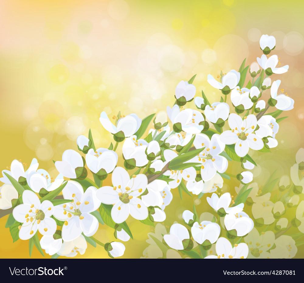 Spring blossom branch vector | Price: 3 Credit (USD $3)