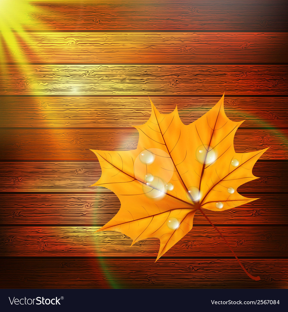 Autumn leaf template plus eps10 vector | Price: 1 Credit (USD $1)