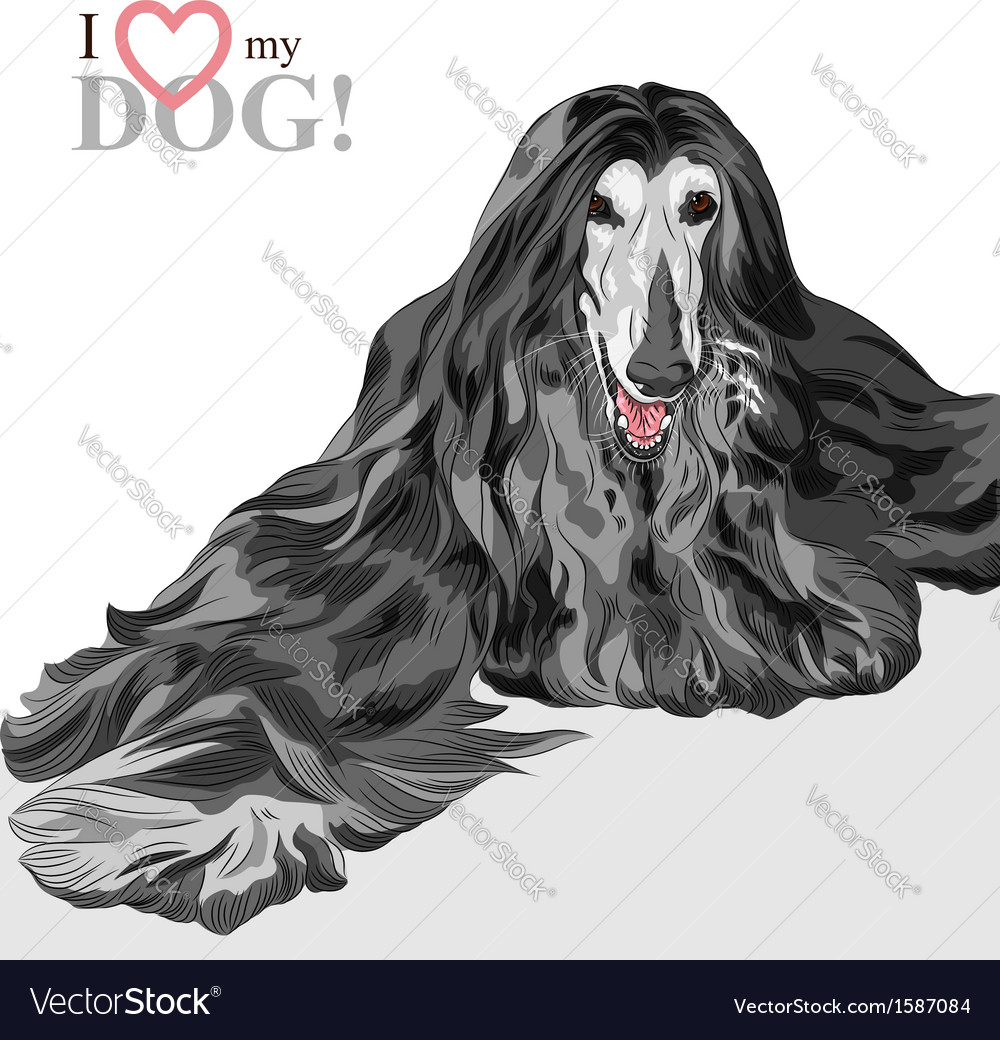 Domestic dog black afghan hound breed vector | Price: 1 Credit (USD $1)