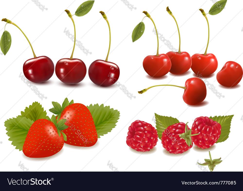 Fresh berries vector | Price: 3 Credit (USD $3)