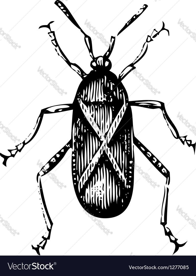 Squash bug vector | Price: 1 Credit (USD $1)