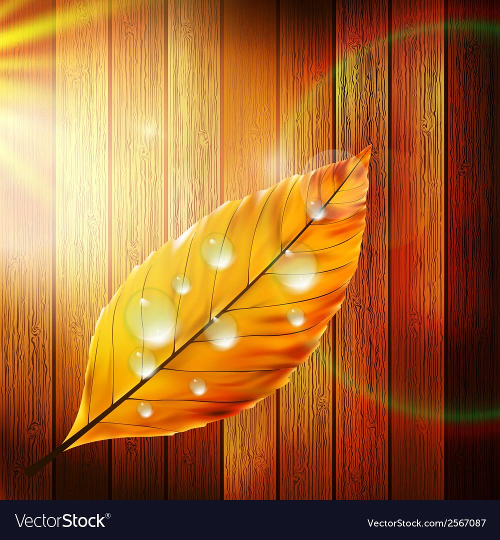 Autumn leaf template plus eps10 vector   Price: 1 Credit (USD $1)