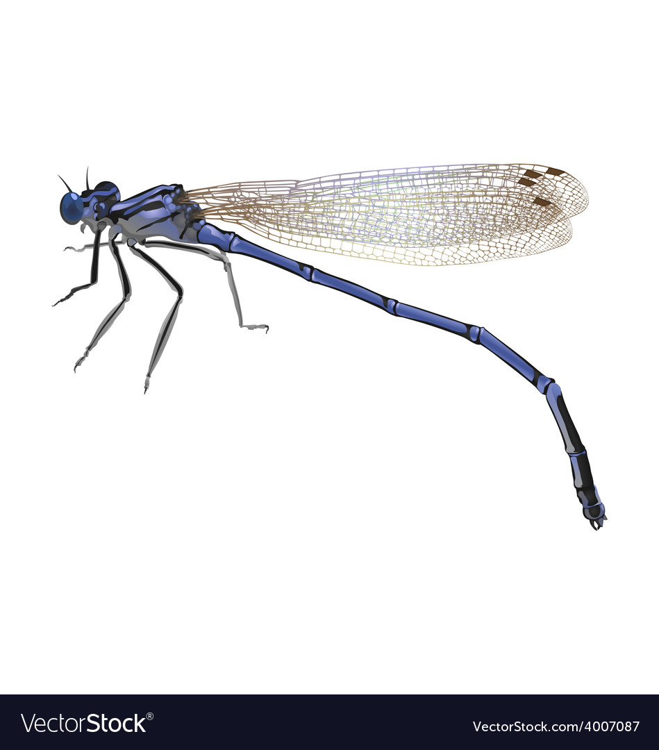 Blue dragonfly with folded wings isolated on white vector | Price: 1 Credit (USD $1)