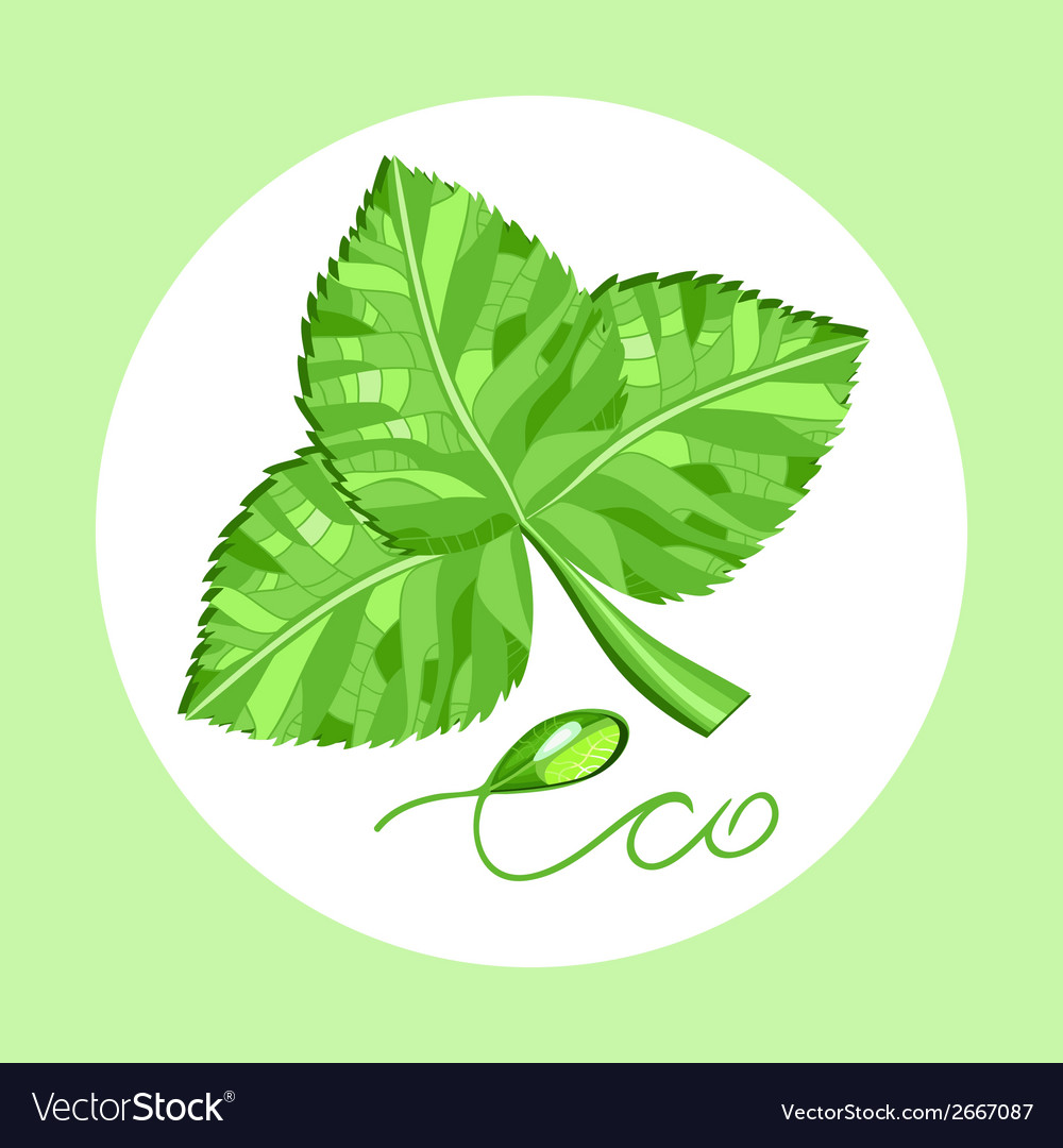 Environmentally friendly product vector | Price: 1 Credit (USD $1)