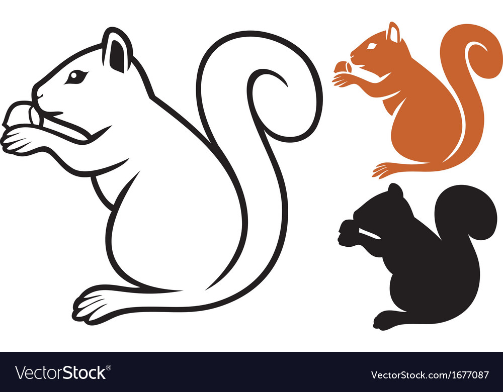 Squirrel with hazelnut vector