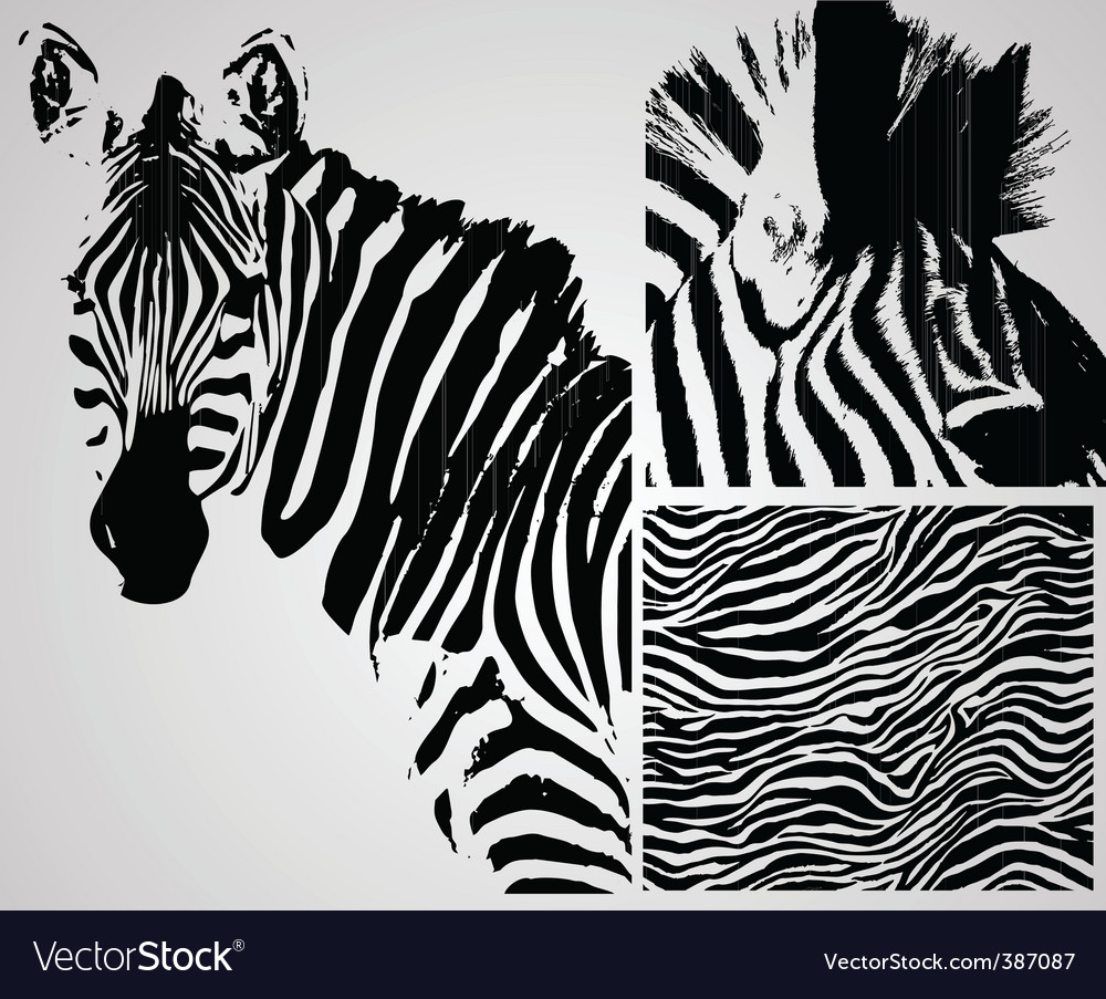 Zebra background vector | Price: 1 Credit (USD $1)