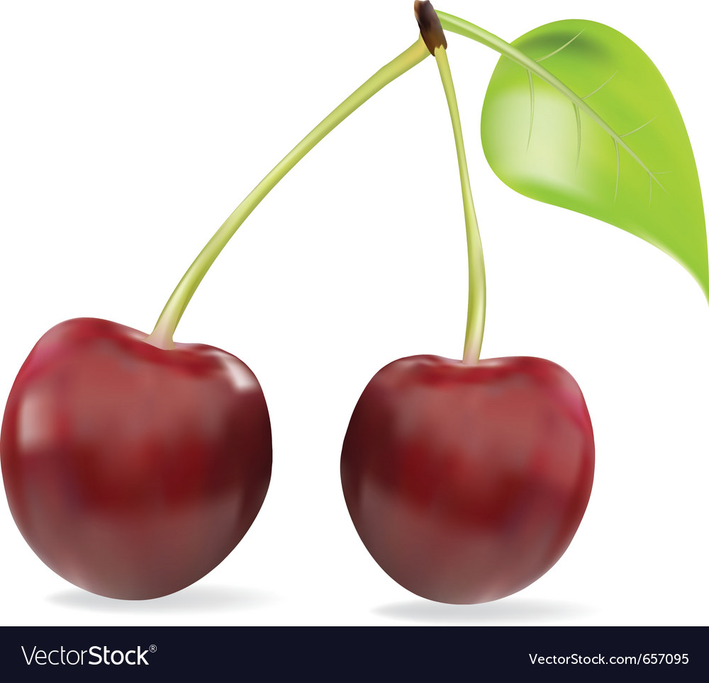 Sweet cherry isolated on white vector | Price: 1 Credit (USD $1)