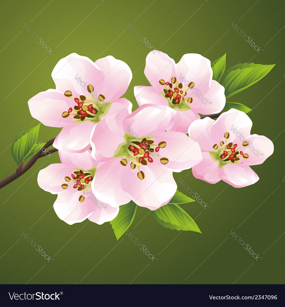 Blossoming sakura japanese cherry tree vector | Price: 1 Credit (USD $1)