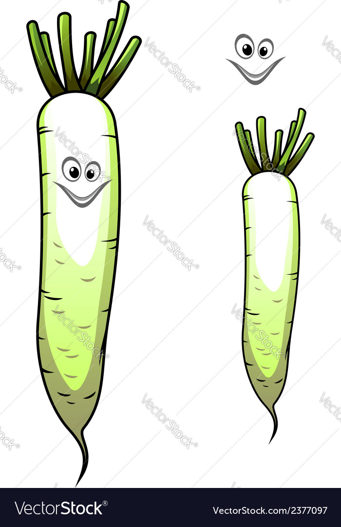 Fresh whole parsnip with a sweet smile vector | Price: 1 Credit (USD $1)
