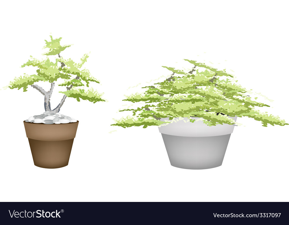 Two bonsai tree in flower pot on white background vector | Price: 1 Credit (USD $1)