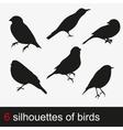 Silhouettes of birds vector