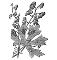 Flower of monkshood engraved vector