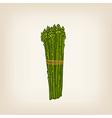 Hand drawn bunch of asparaguses vector