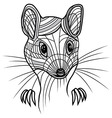 Rat or mouse head animal for t vector
