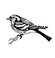 Chaffinch bird hand-drawn vector
