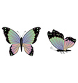 Colorful butterfly2 vector