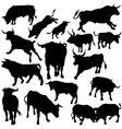 Bull silhouettes vector