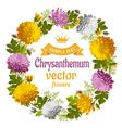 Chrysanthemum vector