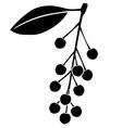 Bird cherry berries vector