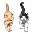 Two cats with their tails up walking frontally vector