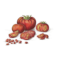 Hand drawn tomatos in color vector
