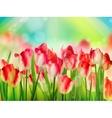 Tulips garden with grass on blue sky eps 10 vector