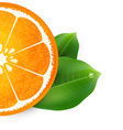 Background with orange vector