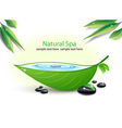 Natural spa background vector