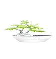 A bonsai tree in flower pot on white background vector