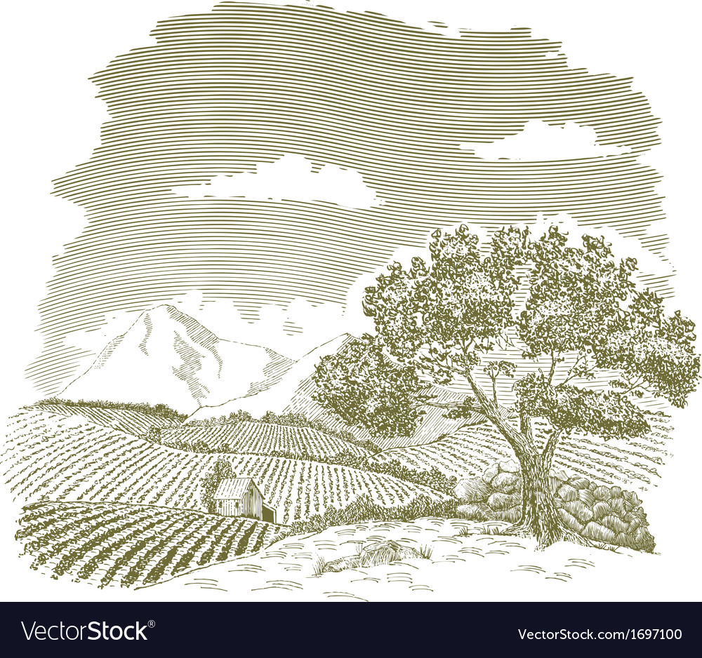 Mountain farm field drawing vector | Price: 1 Credit (USD $1)