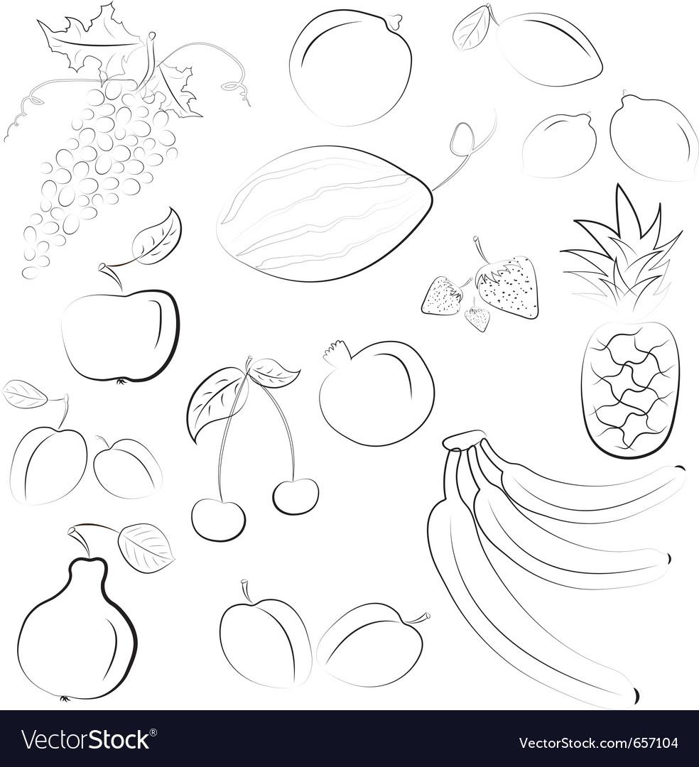 Hand drawn fruit sketch vector