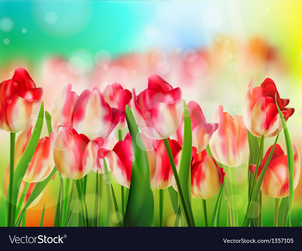 Red tulips field shallow dof eps 10 vector | Price: 1 Credit (USD $1)