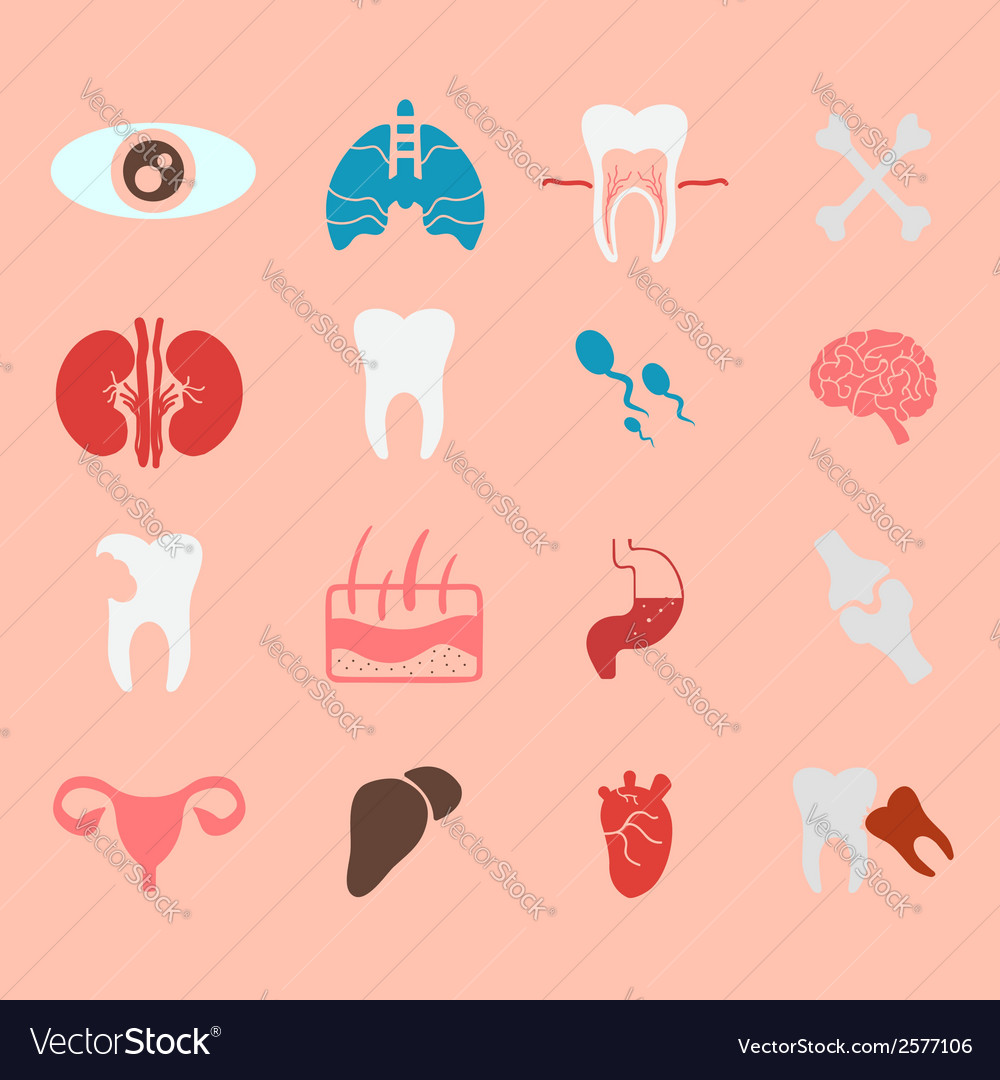Icons of internal human organs flat design vector | Price: 1 Credit (USD $1)