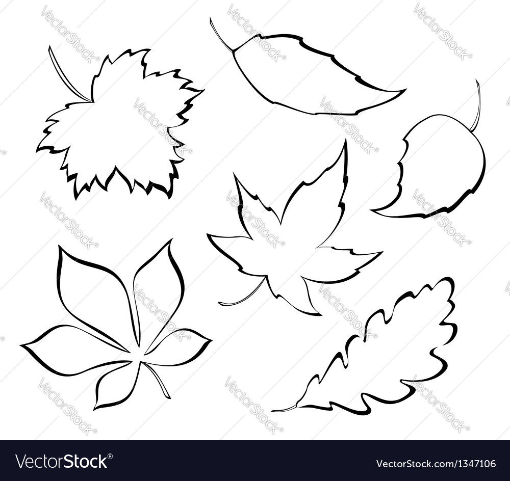 Stylized leaves vector | Price: 1 Credit (USD $1)