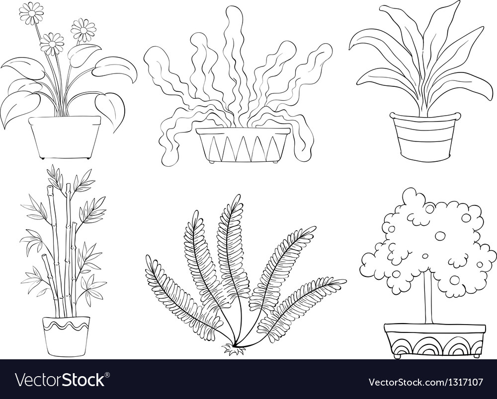 Silhouettes of different shrubs vector | Price: 1 Credit (USD $1)