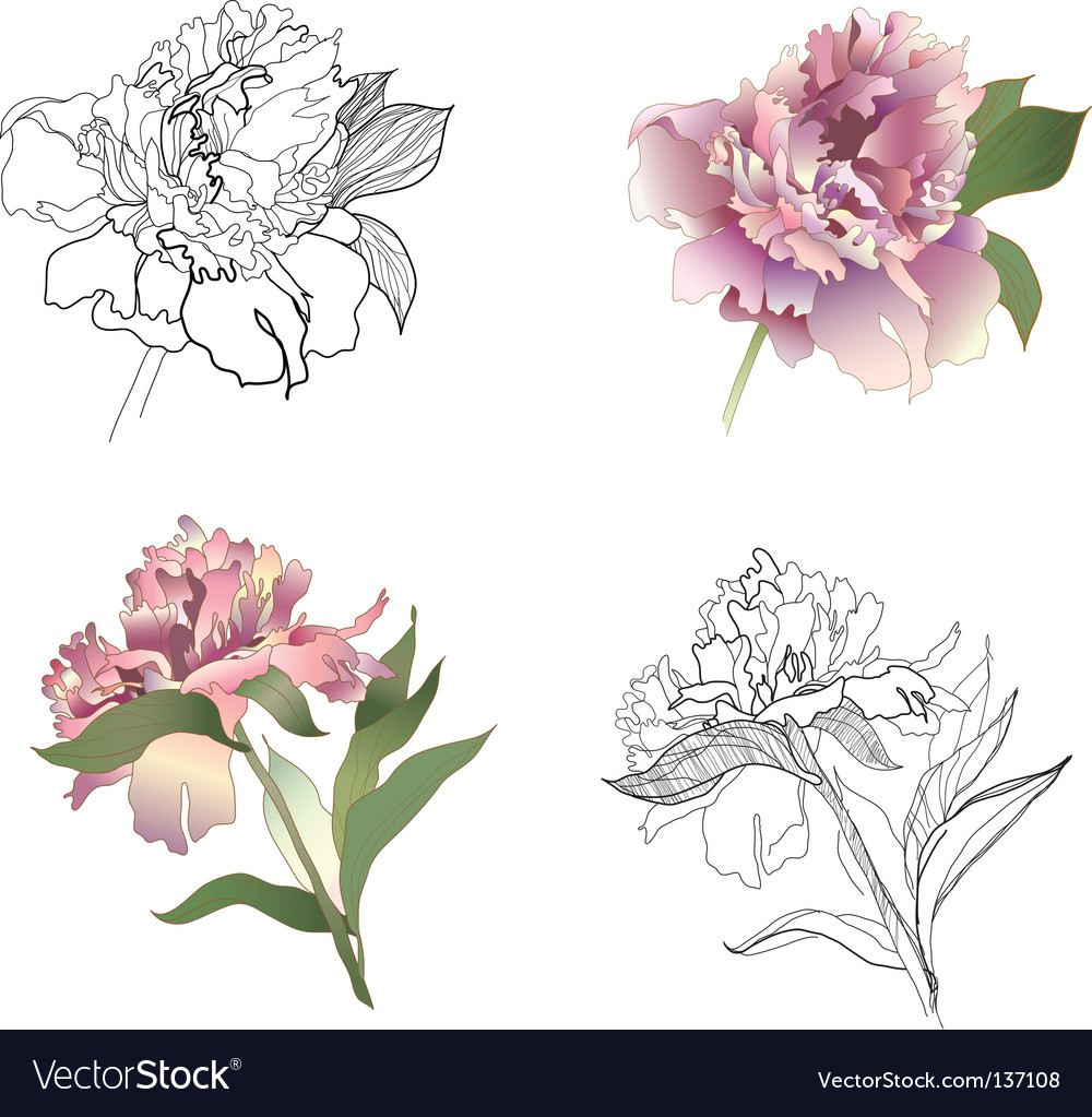 Peony set vector | Price: 1 Credit (USD $1)