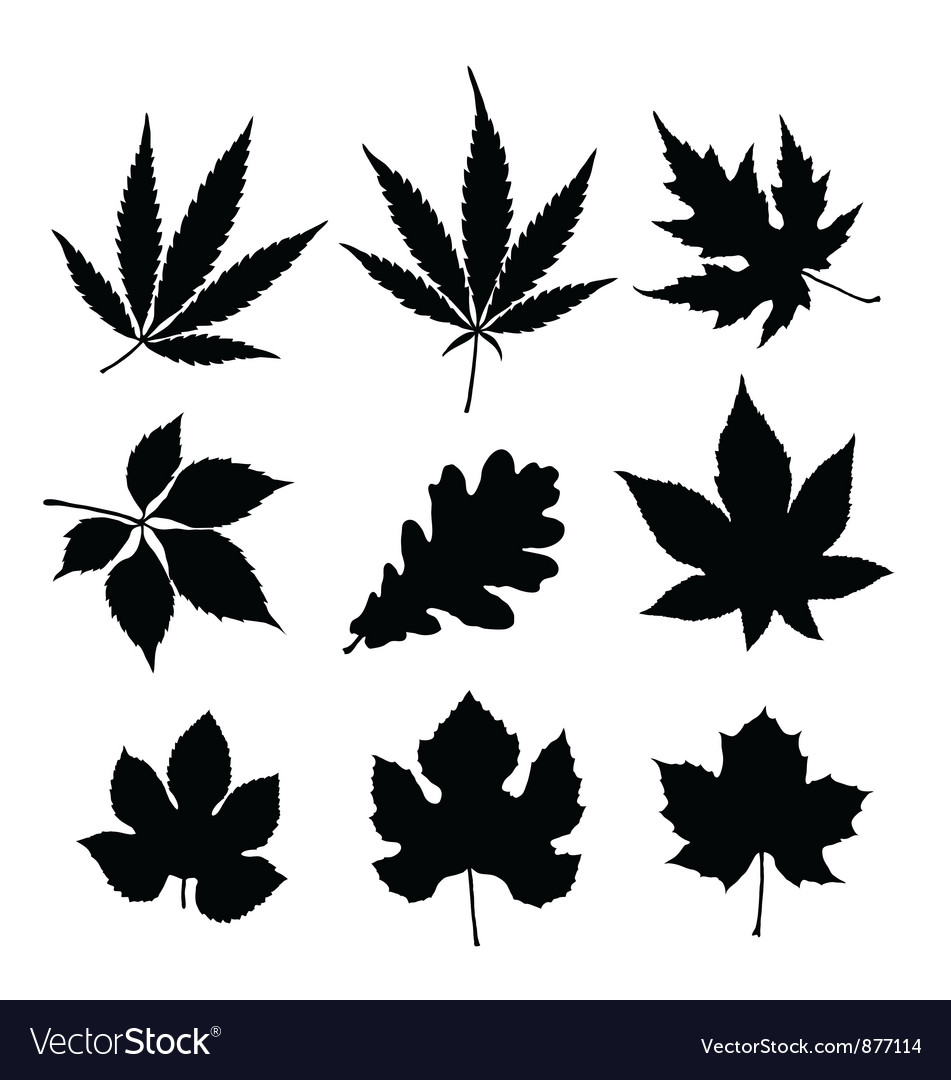 Leaf silhouette vector | Price: 1 Credit (USD $1)
