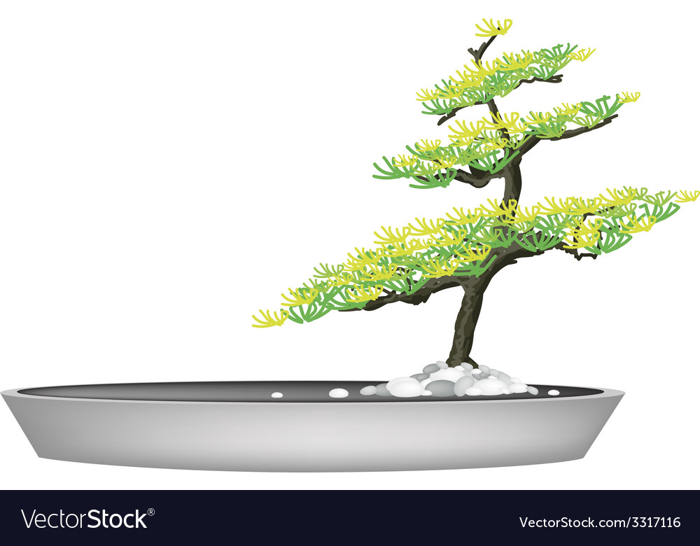 A beautiful fir tree in flower pots vector | Price: 1 Credit (USD $1)