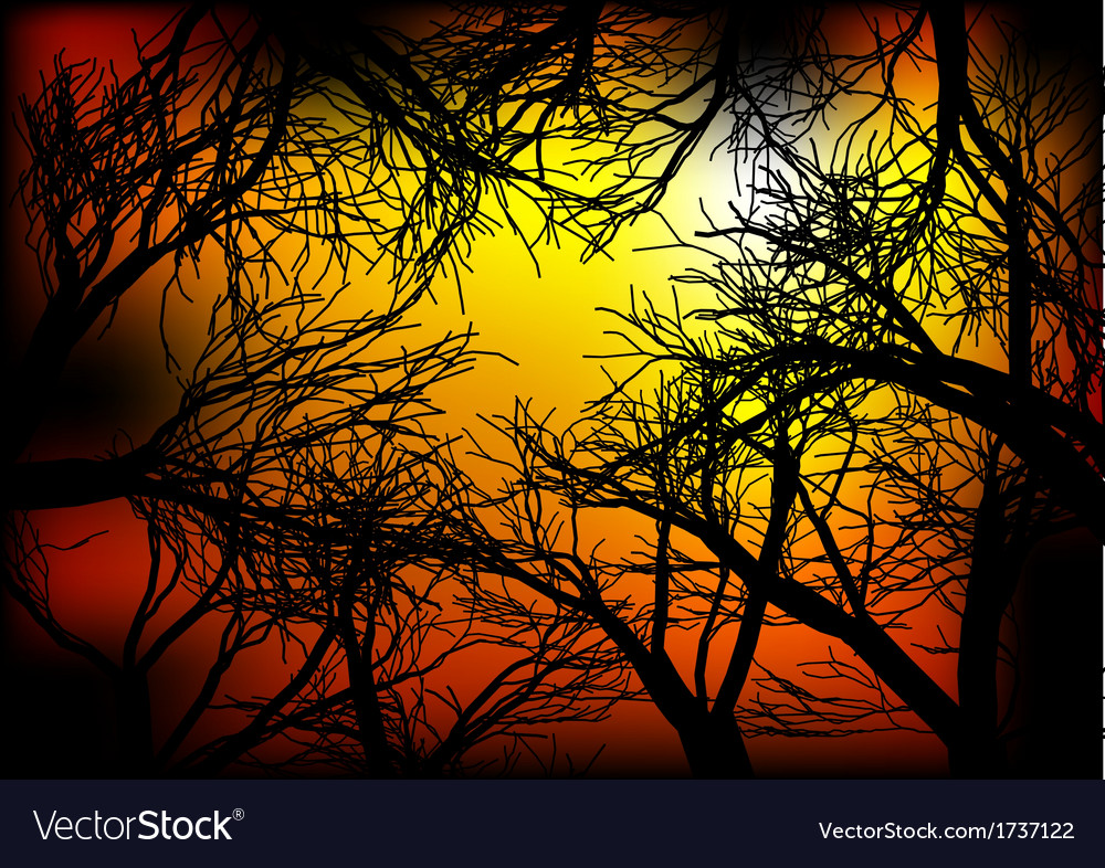 Dark woods vector | Price: 1 Credit (USD $1)