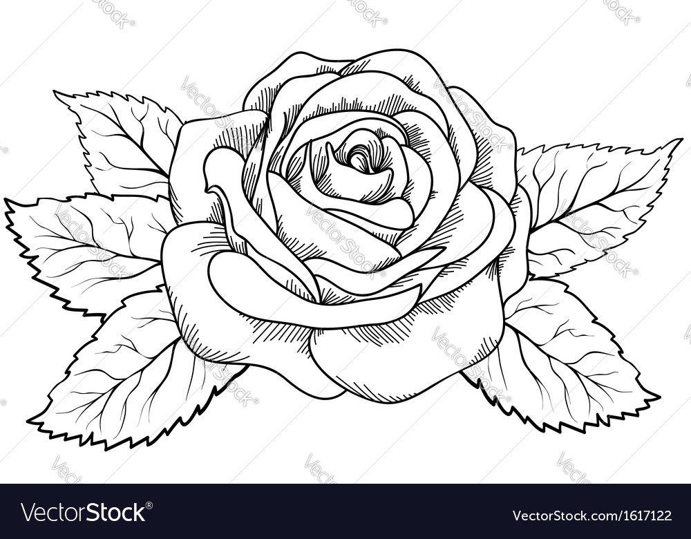 Rose in the style of black and white engraving vector | Price: 1 Credit (USD $1)