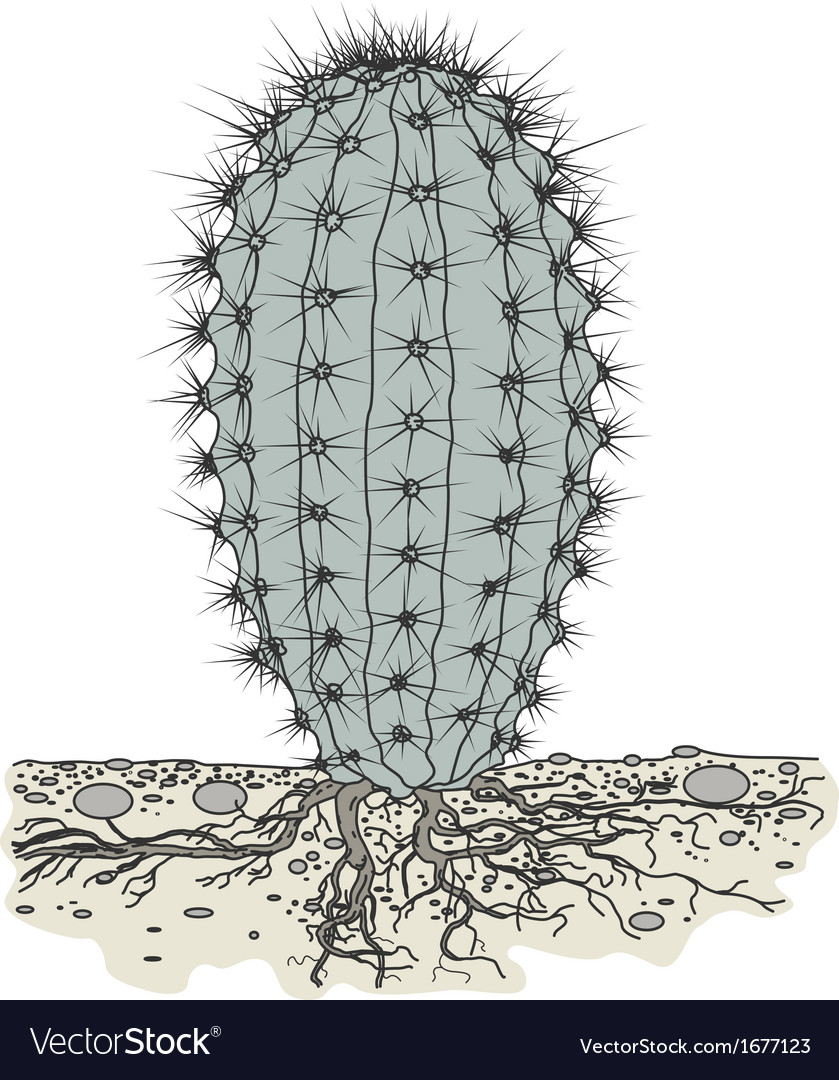 Cactus in soil vector | Price: 1 Credit (USD $1)