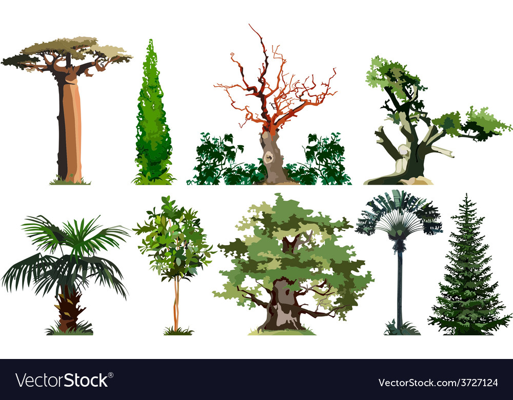 Trees set vector | Price: 3 Credit (USD $3)