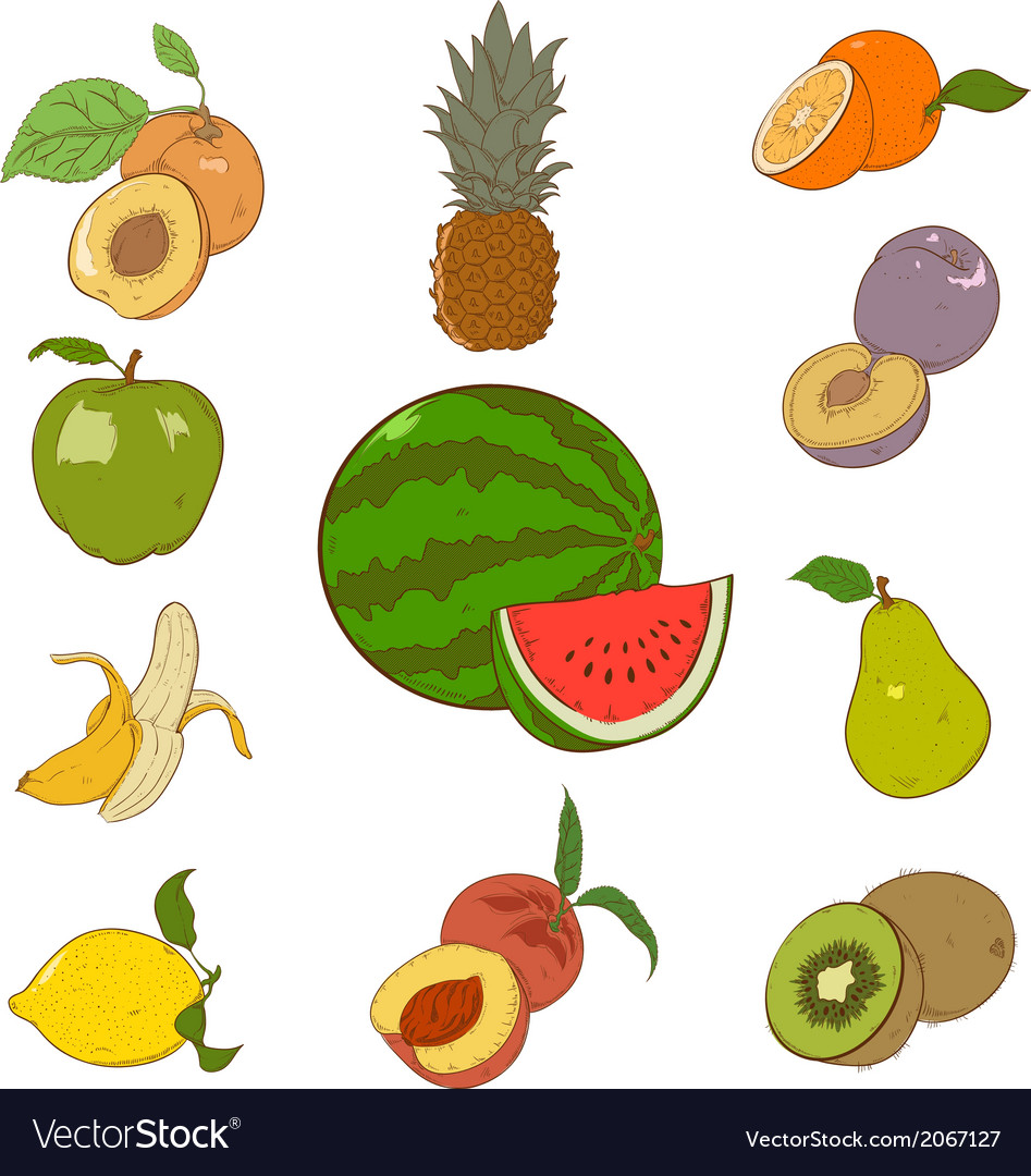 Collection of colorful fruins vector | Price: 1 Credit (USD $1)