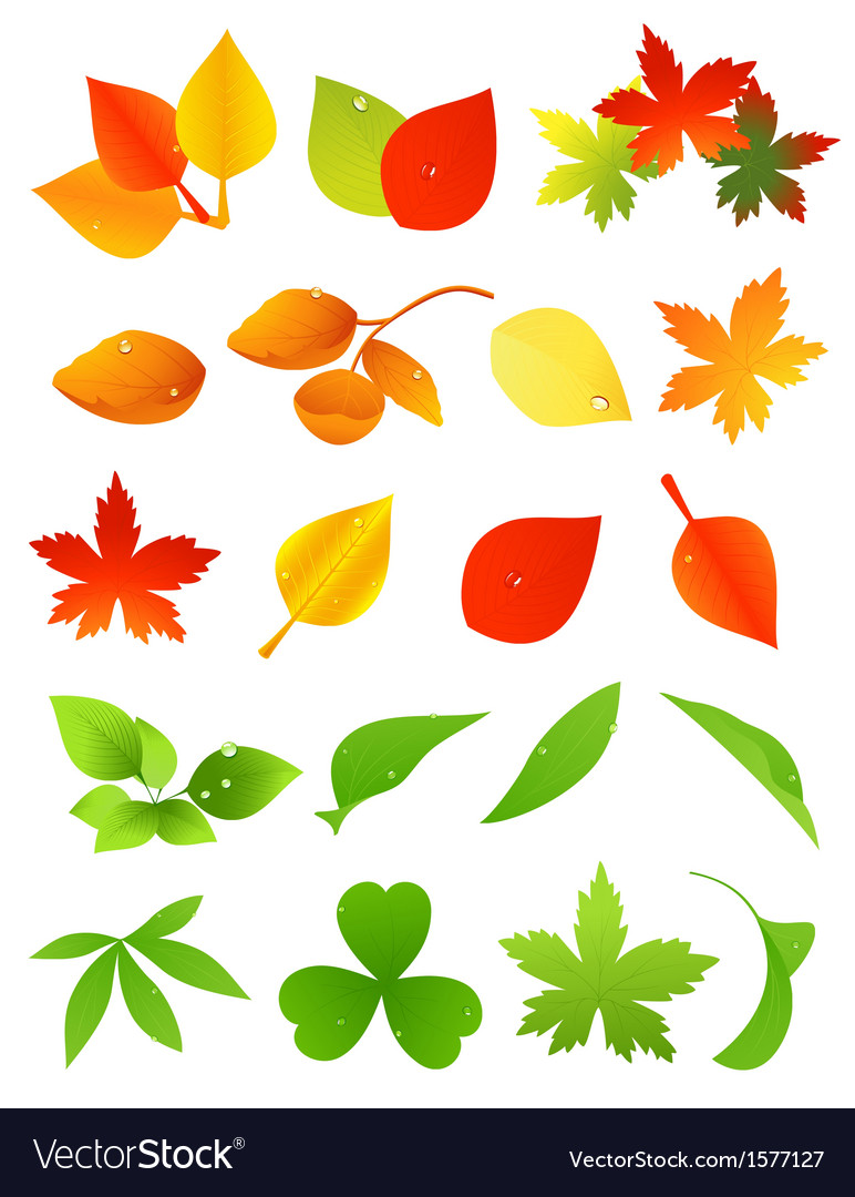 Leaf icon set vector | Price: 1 Credit (USD $1)