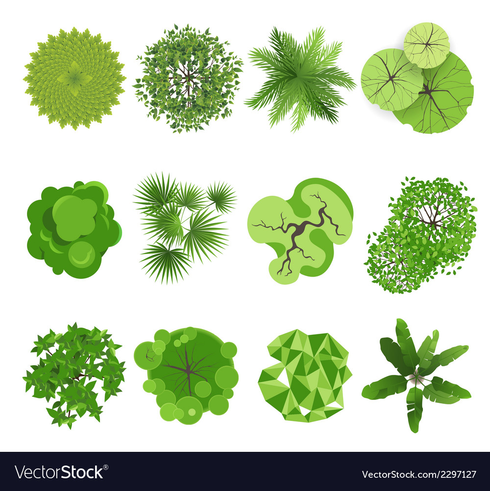 Trees  top view vector
