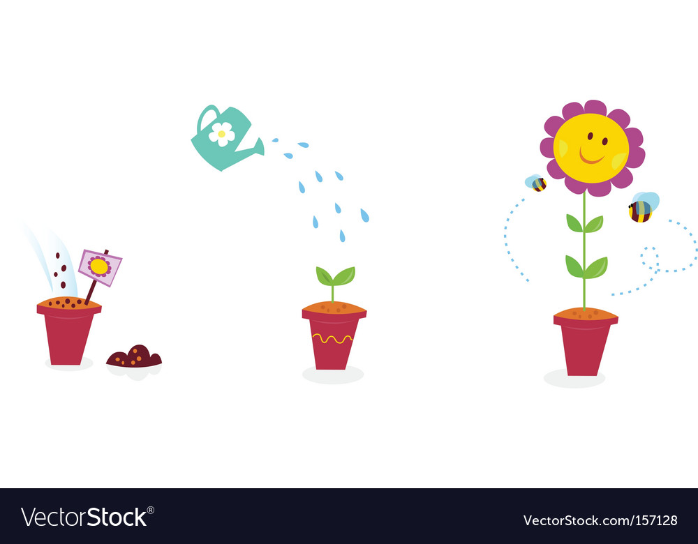 Garden flower growth stages sunflower vector